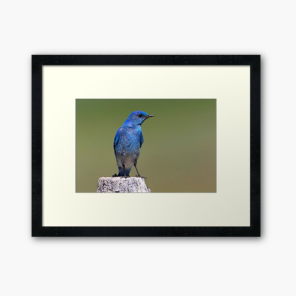 Black-eyed Beauty Framed Art Print