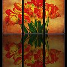 Tulips Reflections by Kasia-D