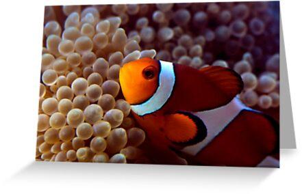 Clownfish by darkmoda