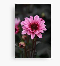 Pink dahlia Canvas Print