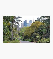 City amongst the trees Photographic Print