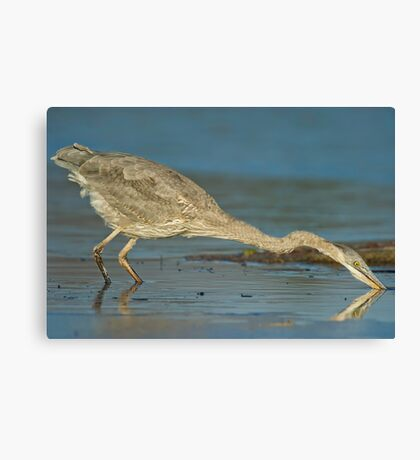 The Heron moved! Canvas Print