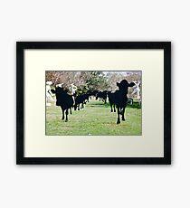 Black Cow Parade Framed Print