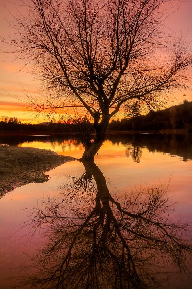 Over Reaching Sunset by Bob Larson