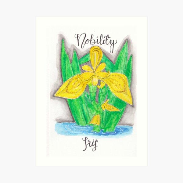 Yellow Iris - Nobility Art Print