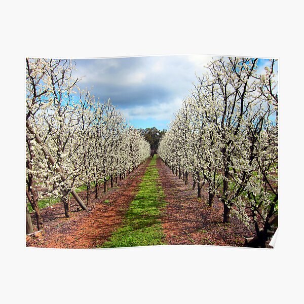 Springtime Orchard Poster