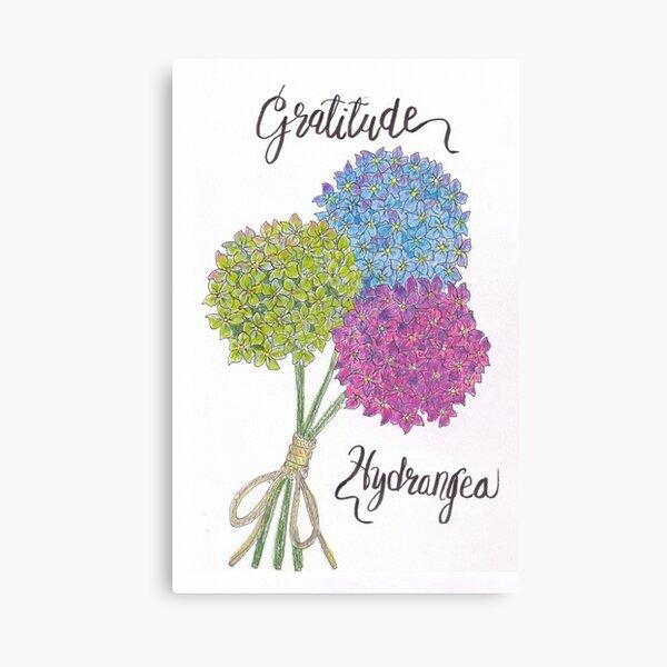 Hydrangea - Gratitude Canvas Print