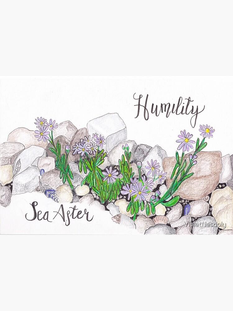 Sea Aster - Humility by VioletNesdoly