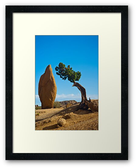 Joshua Tree Sentinals by photosbyflood