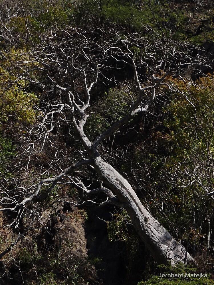 Tree at a rock wall - Arbol en un despeñadero by Bernhard Matejka