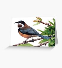 Eastern spinebill Greeting Card