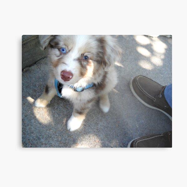 Bi-Color Puppy in the Park Metal Print