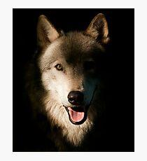 Timber Wolf Portrait Photographic Print