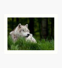 Arctic Wolf in Spring Art Print