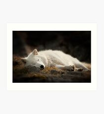 Tranquilty of the Arctic Wolf  Art Print