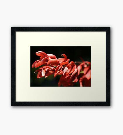 Living Red Framed Print