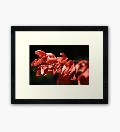 Living Red Framed Print