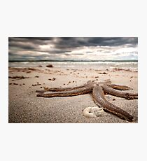 Starfish - Woodman Point, Western Australia Photographic Print