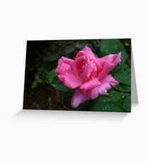A lovely sparkling pink rose Greeting Card