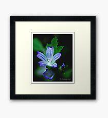 Blue plant Framed Print
