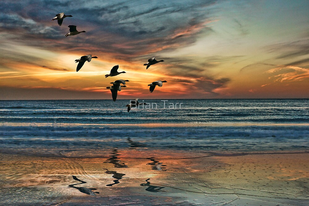 The End of the Day by Brian Tarr
