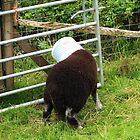 Ram A Lamb A Ding-Dong by artwhiz47