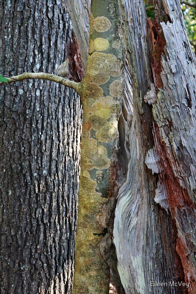 Woods by Eileen McVey