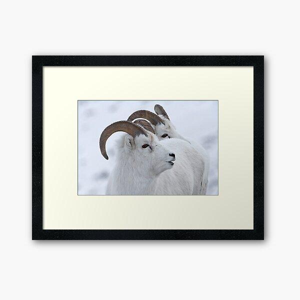 A Sheepish Smile Framed Art Print