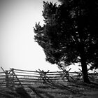 Shadowed Fences by Alex Matsuo