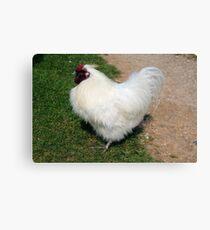 White Chick Canvas Print