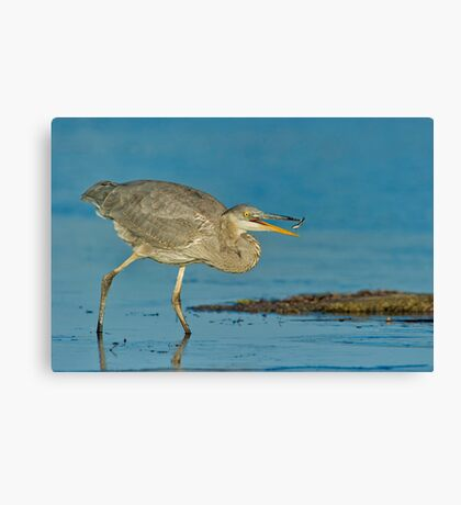Snatch and Grab Canvas Print