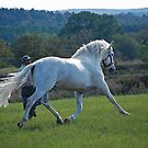 Andalusian Beauty by Cathy Jones