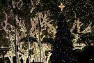 Pedernales Christmas by Cathy Jones