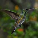Humming Bird by Peter Hammer