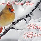 Female Cardinal Christmas Card Winter Scene by Michael Mill