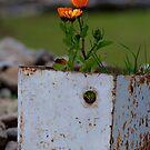 Potted Flower by Darren Freak