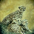 Cheetahs by Richard-Gary Butler