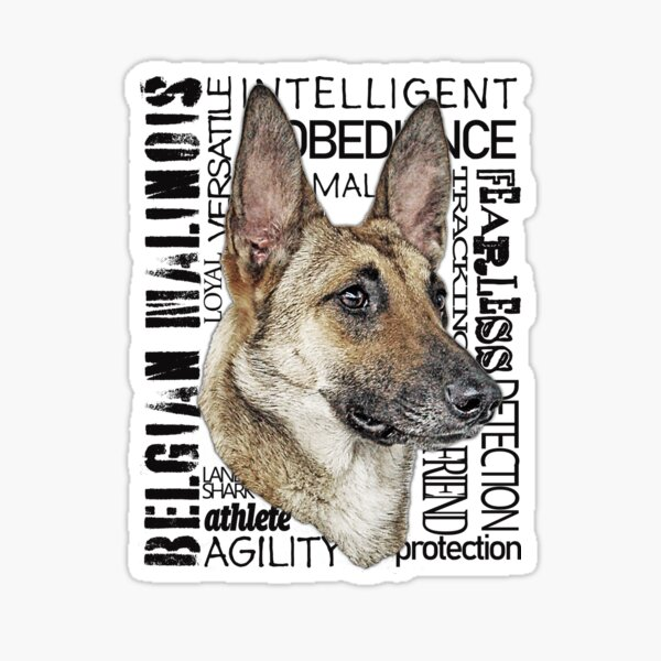 The Many Names: Belgian Malinois Black Lettering T-Shirt  Sticker