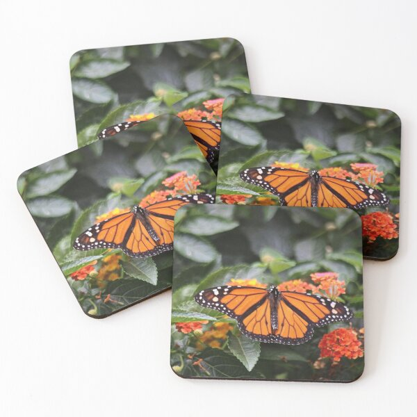 """""""We are like butterflies who flutter for a day and think it is forever.""""   Coasters (Set of 4)"""