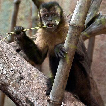 Monkey by stacky