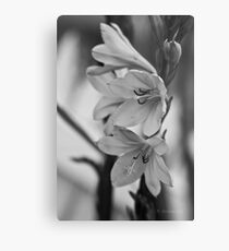 plants are forever in b/w Metal Print