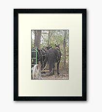 Percheron Team Framed Print