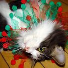 Wishing you a Topsy Turvy Christmas! (3 cats a spinning) by PatChristensen