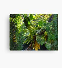 Flora at the River Cuale - Flora al lado del Rio Cuale Canvas Print