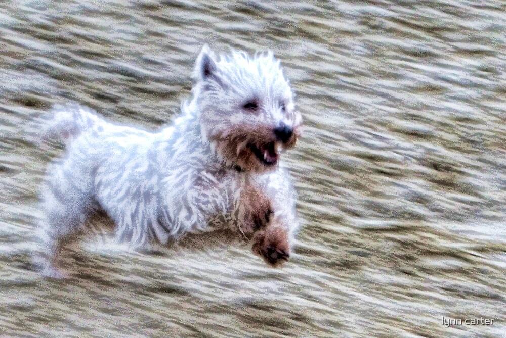 Joyful Blur by lynn carter