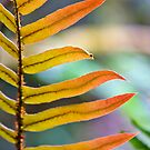 Technicolor Leaf by Ross Jardine