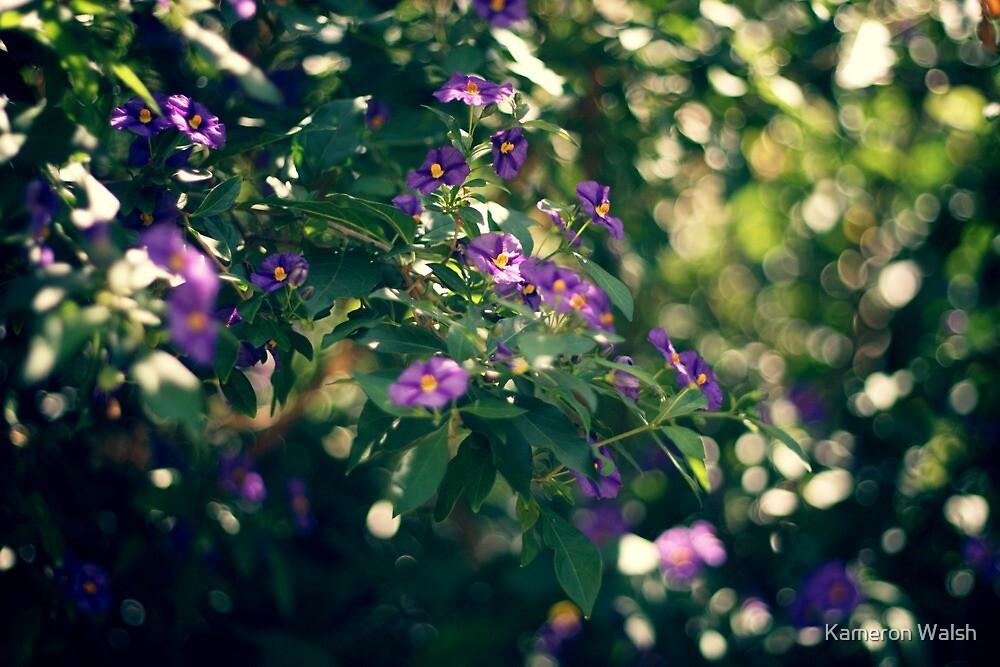 Spring Light by Kameron Walsh