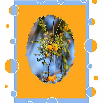 Sweet Acacia by posyrosie