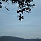 Liberty Reservoir, Maryland by maryevebramante
