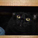Cat in a dresser drawer by maryevebramante